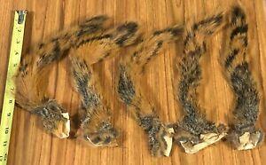 5 Fox Squirrel Tails, Fly Tying, NR