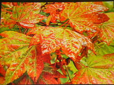 Mega® Vibrant Jigsaw Puzzle ~ Maple Leaves ~ New!