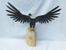 Gravur, Adler Seeadler 6,00 kg (002)
