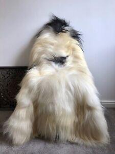 XXL Large Genuine Icelandic Sheepskin Sheep Rug Ivory/Cream Black Real Long Fur.