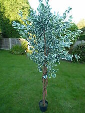 Large Artificial Variegated Ficus Benjamina Tree in a Pot Potted Plant 1.8m 6'