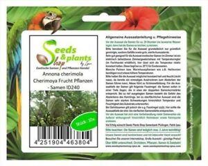 10x Annona Cherimola Cherimoya Fruit Plants - Seeds ID240