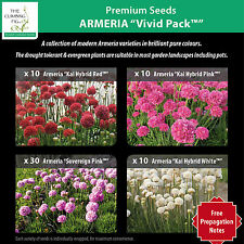 "ARMERIA ""Vivid Pack™"" x60 seeds of Red, Pink, Pale-Pink & White. Agapanthus-like"