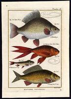 Antique Fish Print-CRUCIAN CARP-GOLDFISH-Bonnaterre-1788