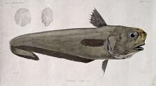 Fossil Fisch Fischen Fischer Norwegen Spitzbergen Färöer Schweden Fish Schuppen