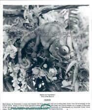 1994 Smiling Balzac de Chameleon Lizard Puppet Geokids Tv Press Photo