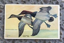Vintage Canvasback Duck Wildlife Postcard Series #13 1939 No Postmark