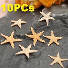 10PCs Mini Natural Starfish Shell Beach Sea Star Landscape Crafts Making Decor ^