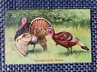 ca1910 Greetings of the Season Thanksgiving Postcard Embossed Turkey