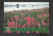 Colour Postcard Alaskan Wildflowers Dwarf Fireweed and Lupine unposted