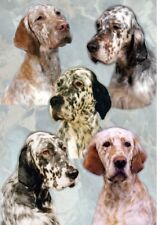 English Setter Dog A6 Blank Card / Notelet No 1 By Starprint