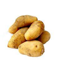 Kartoffel Sieglinde festkochende Speisekartoffeln 1-25 KG neue Ernte 2021