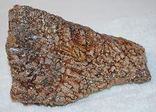 Nice Old Stock Display Specimen of Stromatolite Algae Oldest Fossil 2 lbs, 4+ oz