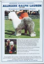 "OLD ENGLISH SHEEPDOG BREED KENNEL ADVERT PRINT PAGE ""ALLMARK"" DOG WORLD 1997"