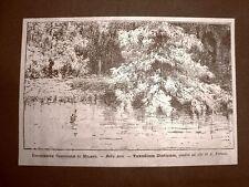 Esposizione Nazionale di Milano nel 1881 Taxodium disticum Quadro di A. Formis