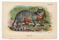 Caffre Cat Wild Feline Original c1896 Chromolithography Print