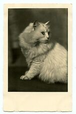 vintage cat postcard real photo white Turkish Angora peers behind Cat Charity