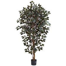 6' Capensia Ficus Tree X 3 W/1008 Lvs