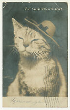 An Old Rounder Cat Kitten Vintage 1905 Real Photo Postcard RPPC