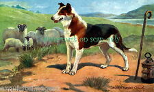 Vintage N.Drummond~Smooth Coated Collie Dog~Sheep Herding ~ New Large Note Cards