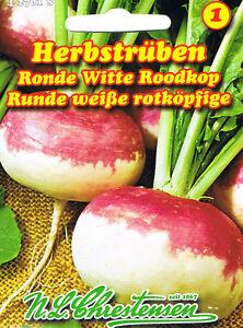 (3,3€/10g)  Herbstrüben 'Runde weiße rotköpfige' Rübe  Wasserrübe  Samen 427018