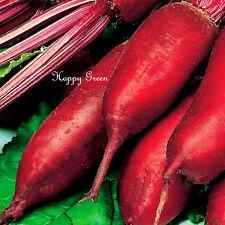 NASTRO di semi-Barbabietola Cylindra-NASTRO 5 M - 120 semi-vegetale facile seminare