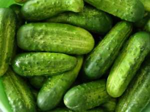 Gherkin Seeds x 20 'National' Cucumber Pickling  Premium Quality - FREE DELIVERY