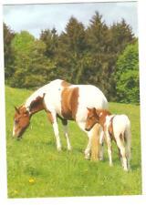 No title Horse postcard - Foal - Colt - Pan Dragon