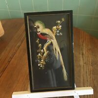 Vtg Mexican Feather art bird water color branch framed Folk art colorful red