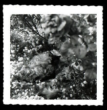 "AMAZINGLY CAMOUFLAGED CATS in NATURE! ""CAN YOU FIND THEM"" 1950s VINTAGE PHOTO!"