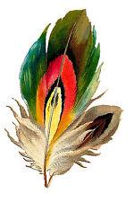 "Waterslide Decals (4pcs 2.5""x3.5"") FLONZ 412-0106 Feather Bird Vintage Painting"