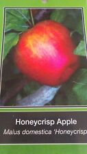 4'-5' live Honeycrisp Apple Fruit Tree Plant Live Trees Juicy Fresh Apples Home