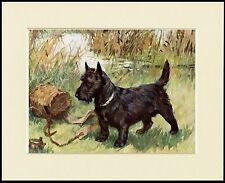 SCOTTISH TERRIER AND FISHING BASKET DOG PRINT MOUNTED READY TO FRAME