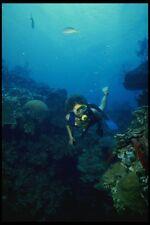156005 Scuba Diver And Pacific Sea Fans A4 Photo Print