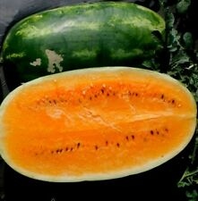 Orange Tendersweet Watermelon! 15 SEEDS! COMB. S/H! SEE MY STORE FOR RARE SEEDS!