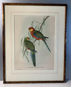 """J Gould & H C Richter Lithograph Birds  """"Platycercus Icterotis """" Colored Framed"""