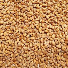 Supravit Weizen Futterweizen 5 kg  – Einzelfuttermittel für Nager & Geflügel