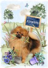 """Pomeranian Dog (4"""" x 6"""") Blank Card/ Notelet Design By Starprint"""