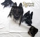Belgian Tervuren Shepherd T-shirt ~ Natural ~ Size 3XL ( 54 ~ 56 )