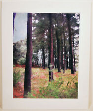 Trees In Harriman---  20 X 16 Matted Landscape Print by Alan Del Vecchio