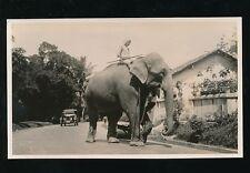 Ceylon Kandy Animals ELEPHANT 1933 photograph