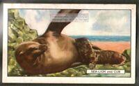 Sea Lion and Cub c80 Y/O Trade Ad Card