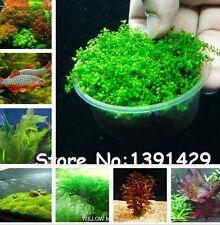 New listing New ! 1000 Pcs Underwater Aquatic Plants Seeds Moss Aquarium Plant Grass seeds