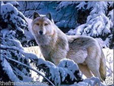 WOLF IN SNOW - 3D LENTICULAR MOVING PICTURE 400mm X 300mm (NEW)