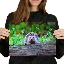 A4 - Cute Cheeky Hedgehog Garden Poster 29.7X21cm280gsm #14322