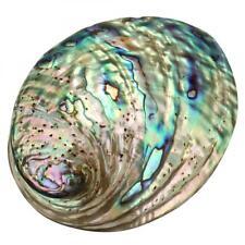 90x120x39mm 3-9mm Multihole Abalone Shell DIY Home Decor Seashell Rainbow Gift