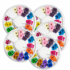 5Pcs 12 Color 3D Decor Real Dry Dried Flower for UV Gel Acrylic Nail Art Tips US