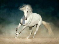 CHENPAT1051 A animal white horse handmade painted oil painting art on canvas