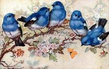 Beautiful Blue Birds on a branch Quilting Fabric Block 5x7
