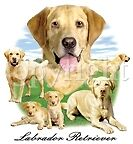 TEE SHIRT - LABRADOR - GOLDEN - #2 - DOG
